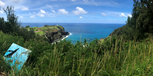 Kilauea Point panorama 1/2