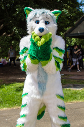 March Meet: Surprised Flow Fox