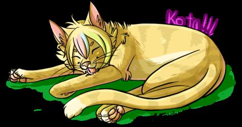 Kota sleepies