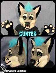 Gunter the Grey Fox