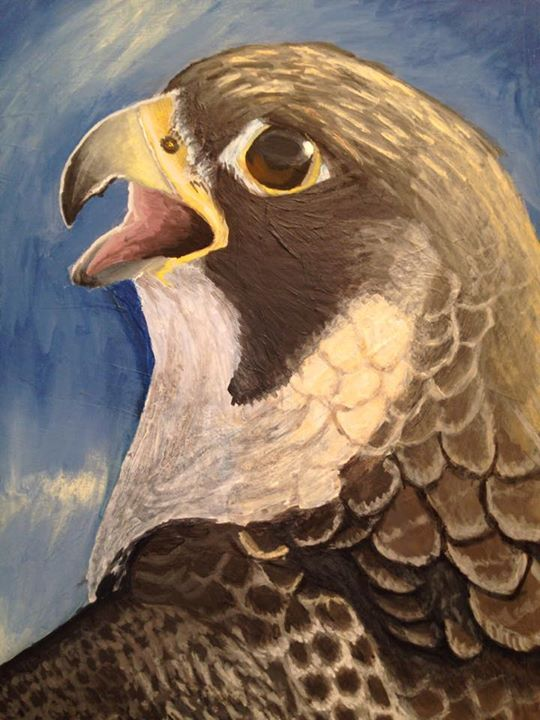 Featured image: Peregrine Study