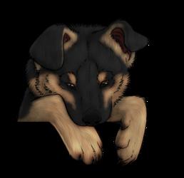 Peeking Puppy header