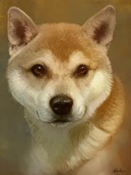 Mini Portrait - Shiba