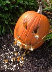 Pumpkin goes Blergh!