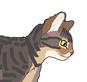 Cat Genetics Guide: Tabby Base Colors
