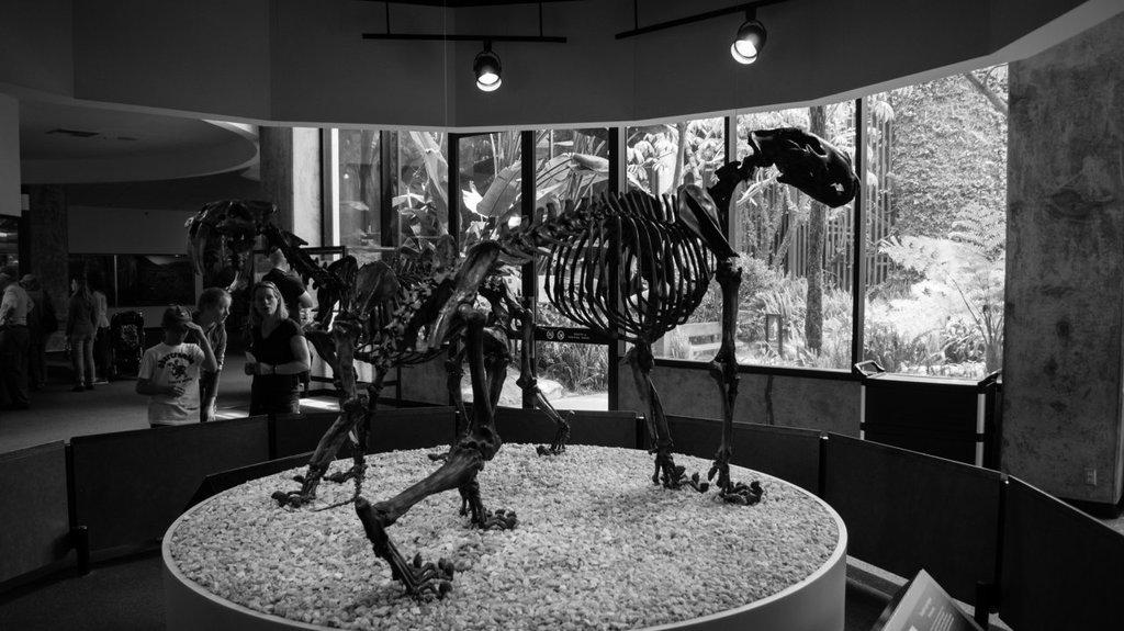 Smilodon and Panthera leo atrox