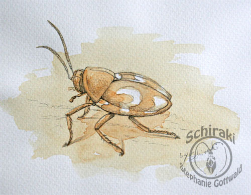 Coffee roach
