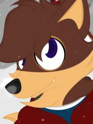 A fox in the snow.