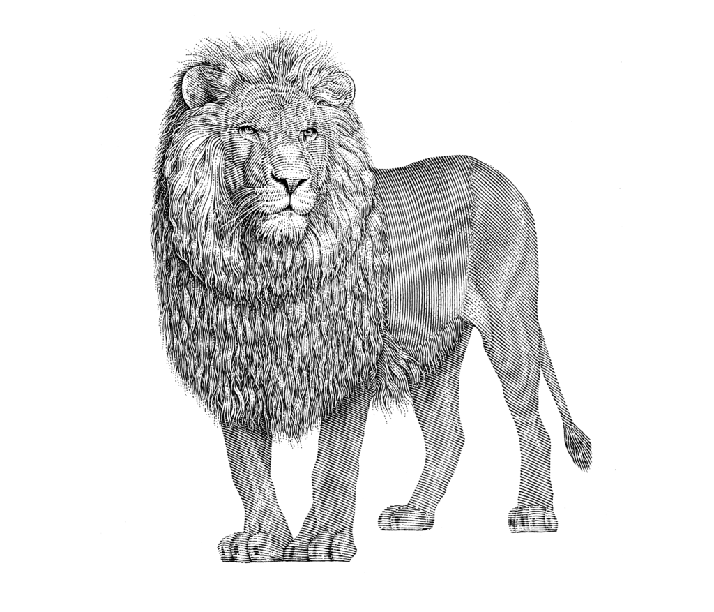 Most recent image: Lion of Yehuda