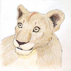 Cub Color Sketch