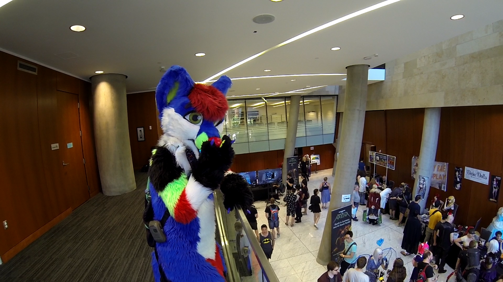 Sparkle Dog Excitement! - NWFF 2015