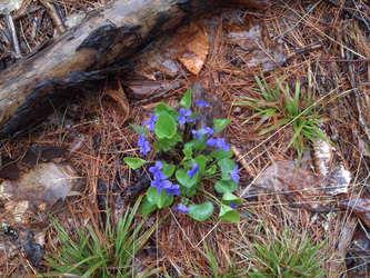 Just some violets