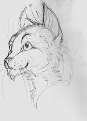 Toony Kitty Sketch
