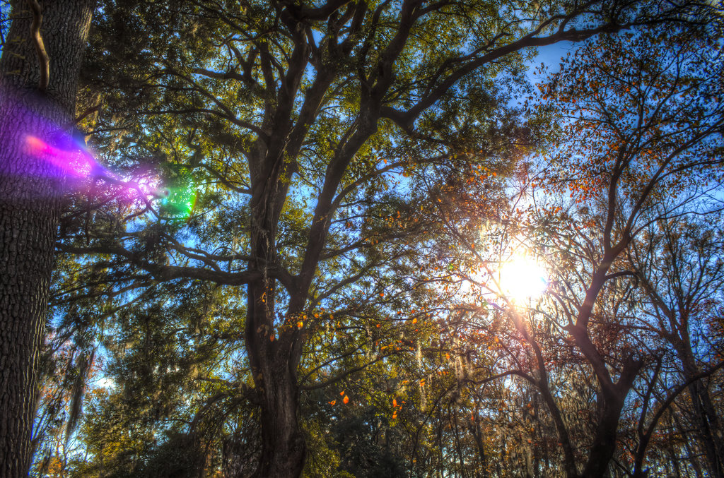 The Light in the Trees (hdr)