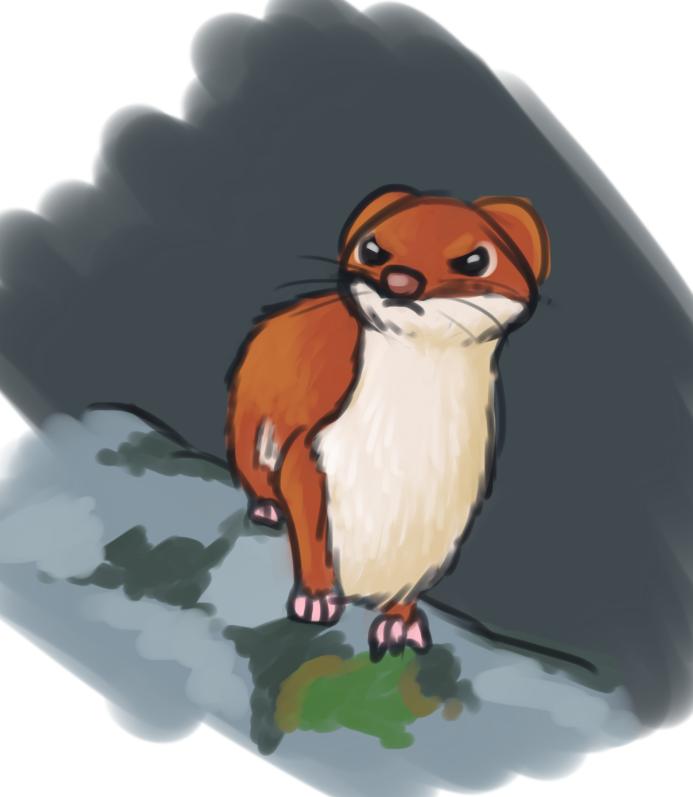 Most recent image: sour stoat