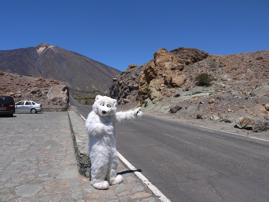 Tender paws thumbing a ride to MT Teide volcano (3rd tallest