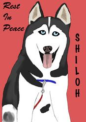 RIP Shiloh