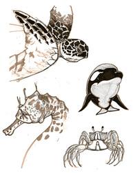 Homework - 4 Sea Creatures