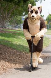 DecemFUR: Scooter Dog