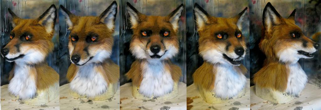 Red fox RF 2014