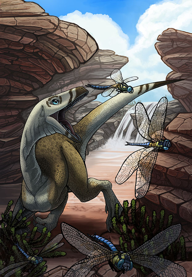 Hunting Dragonflies