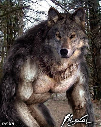 Werewolf Photomorph