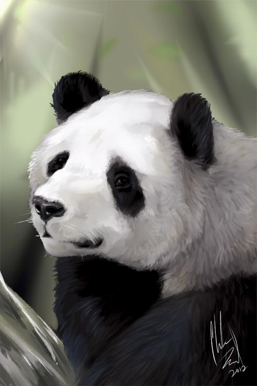 Animal Portrait 11 - Panda