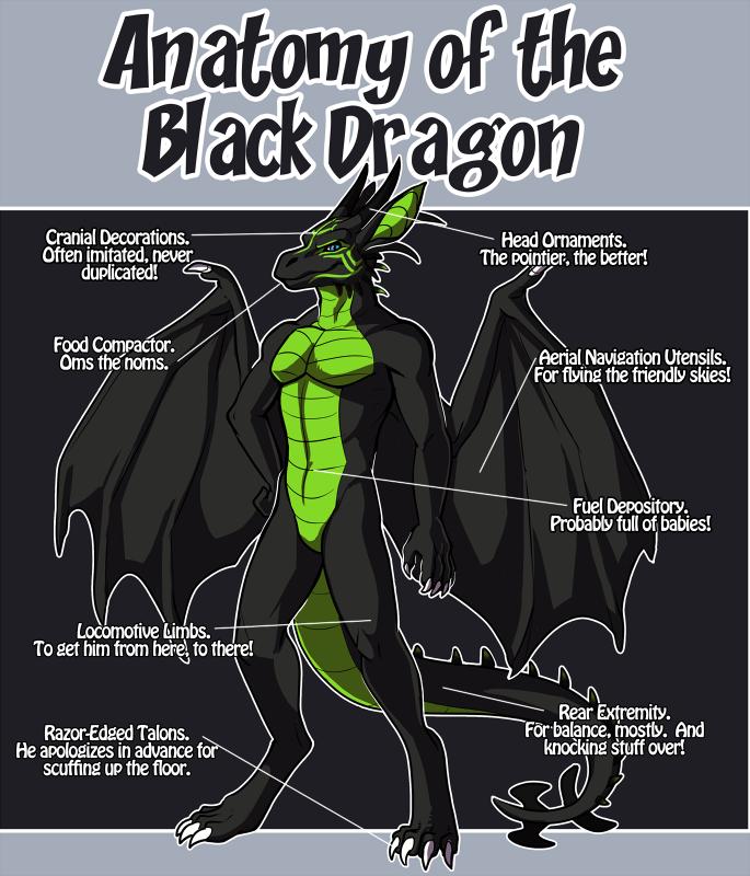 Anatomy of the Black Dragon