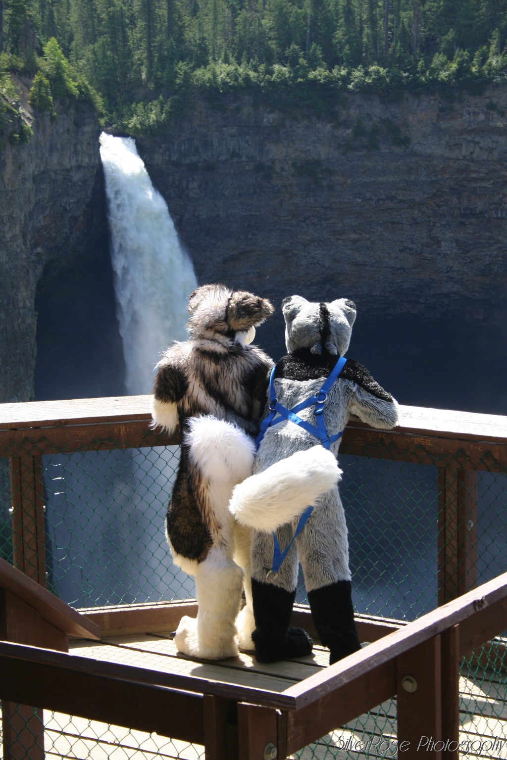 Most recent image: Qmick and Kriske at wells grey park tail shot