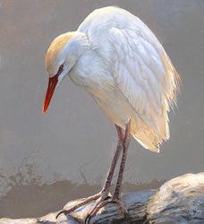 Flooded Field - Cattle Egret