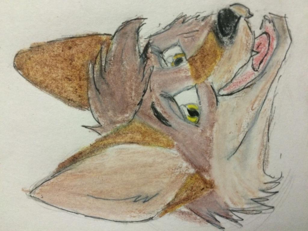 Kuna Coyote Headshot