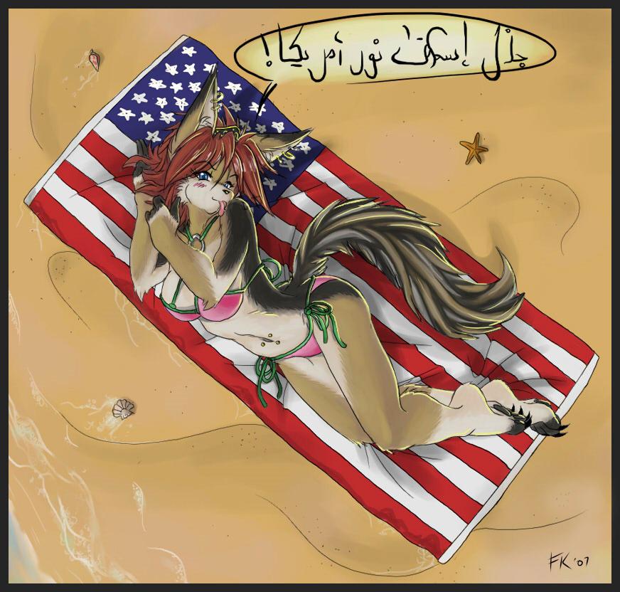 Arabian Jackal, American Summer