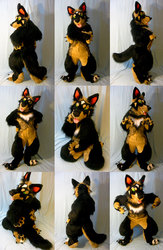 Wolfdog Fursuit