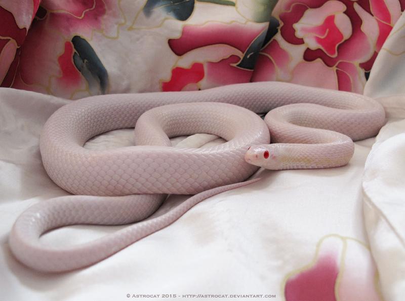 Snake on Silk
