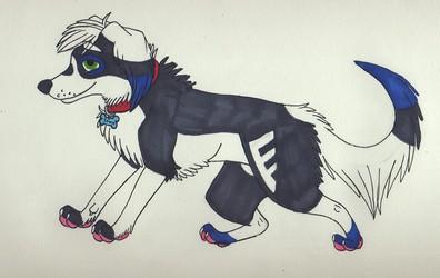 Afghan hound !