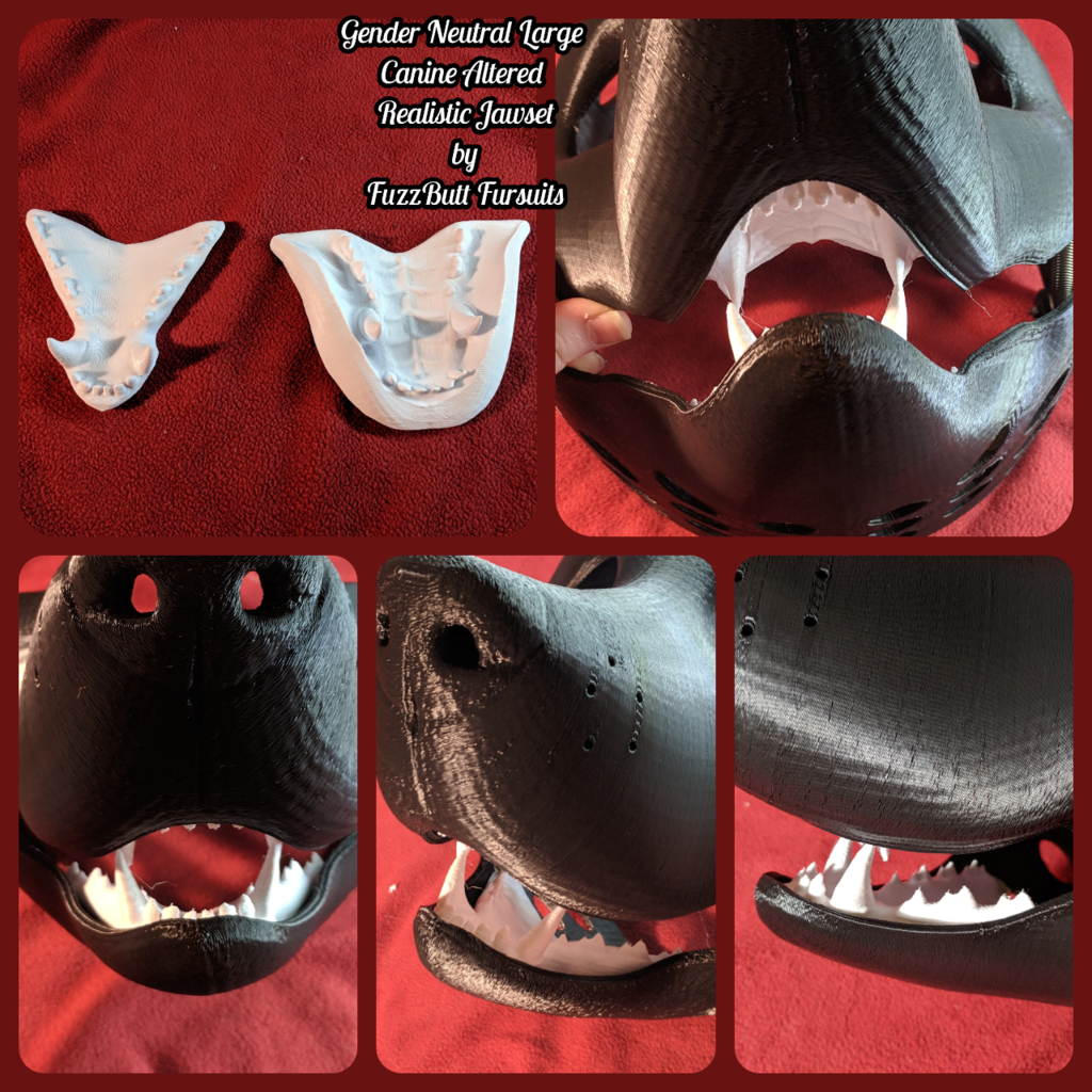 Gender Neutral Large Canine A1179 Realistic Jawset