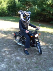 Owl on a Moped