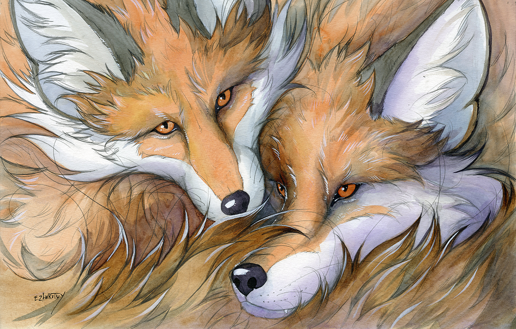 Most recent image: Two Foxes