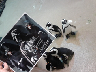 Penguins of the Sith