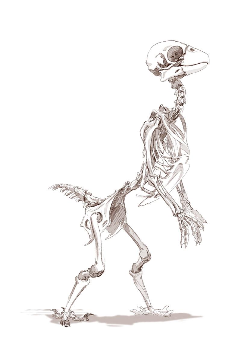 Most recent image: Kimet Skeletal Structure