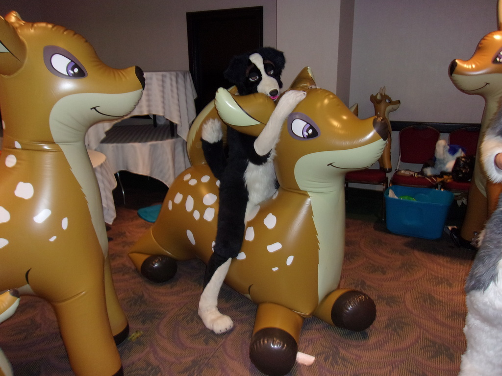 Border Collie riding a Deer inflatable.