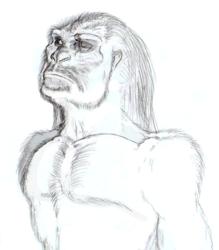 Homo erectus - RAW