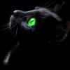 avatar of blackcatberry