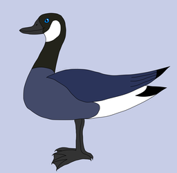 Just a mostly-ordinary goose