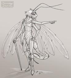 White plumed moth