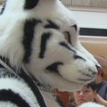 Friday Fursuit Madness: 2 Tails Are Better Than 1