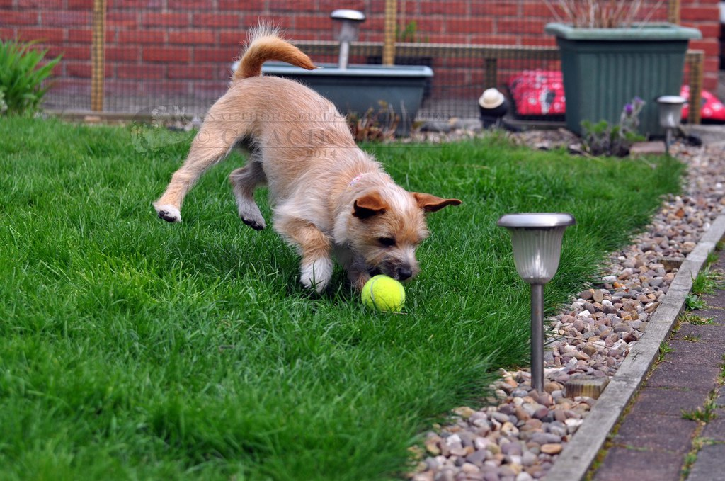 Millie Playing