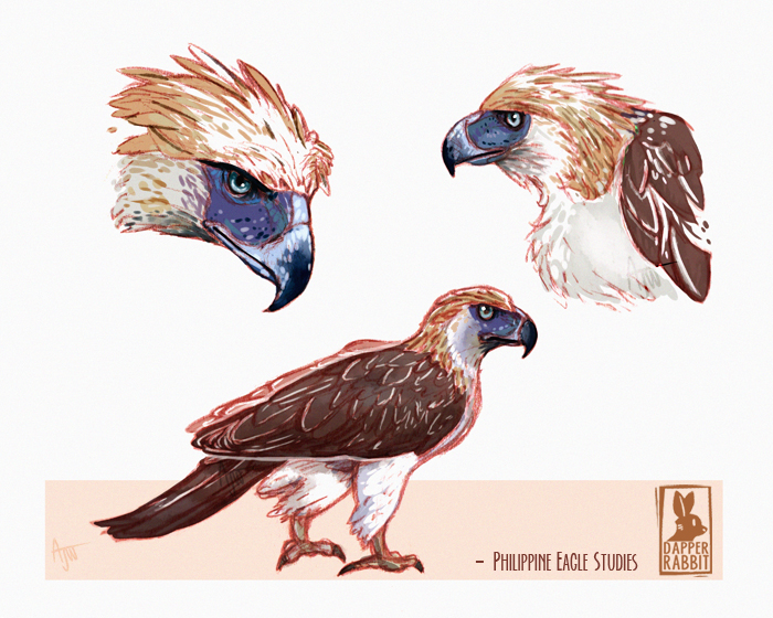 Philippine Eagle studies