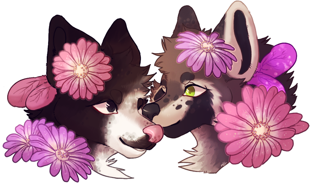 Most recent image: daisies