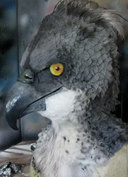 Hippogriff mask